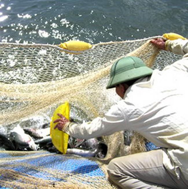 Gần 1.000 tỷ đồng xây trung tâm hậu cần nghề cá