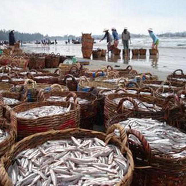 Hơn 585 tỷ đồng đã đến tay ngư dân