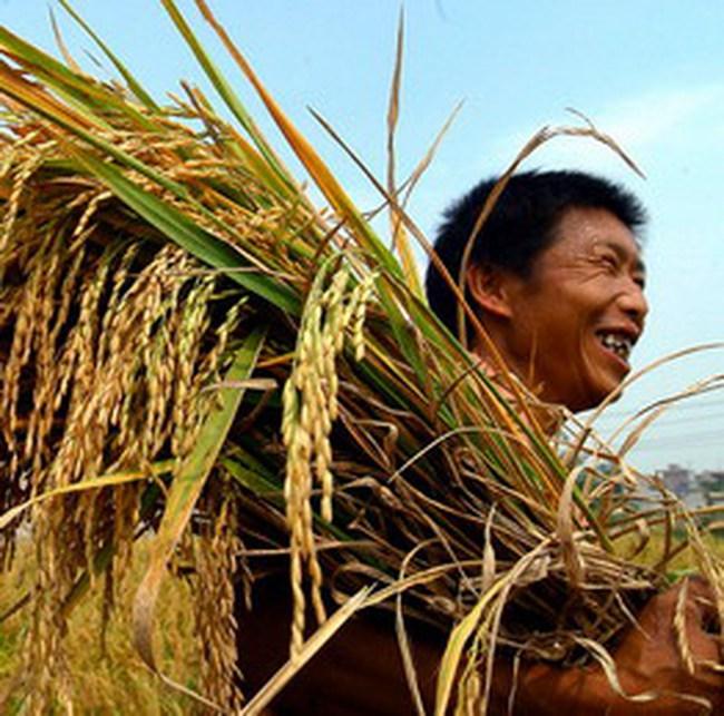 Việt Nam là chủ nhà hội nghị lúa gạo quốc tế 2010