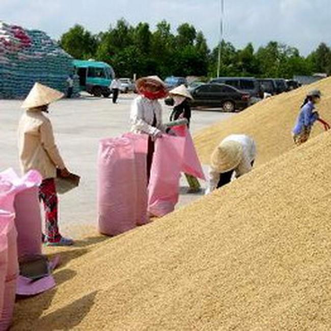 Hàng ngàn tấn lương thực tồn đọng