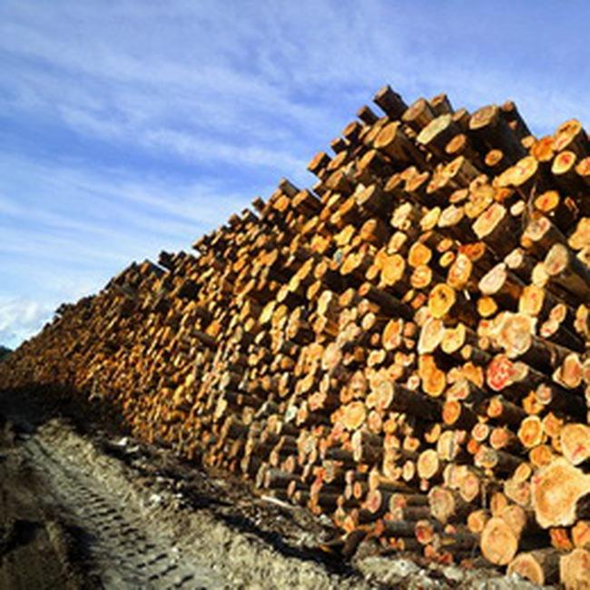 Nhập khẩu gỗ nguyên liệu 11 tháng năm 2008 chỉ đạt 8,7%