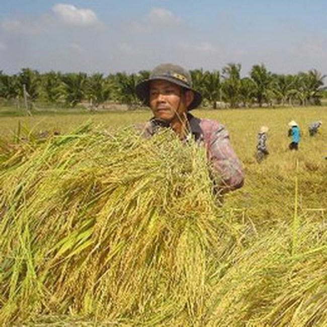 Sớm đưa dự án Chợ đầu mối lúa gạo tại Cần Thơ vào hoạt động