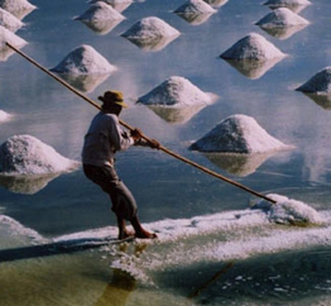 Điều chỉnh kế hoạch mua muối dự trữ quốc gia