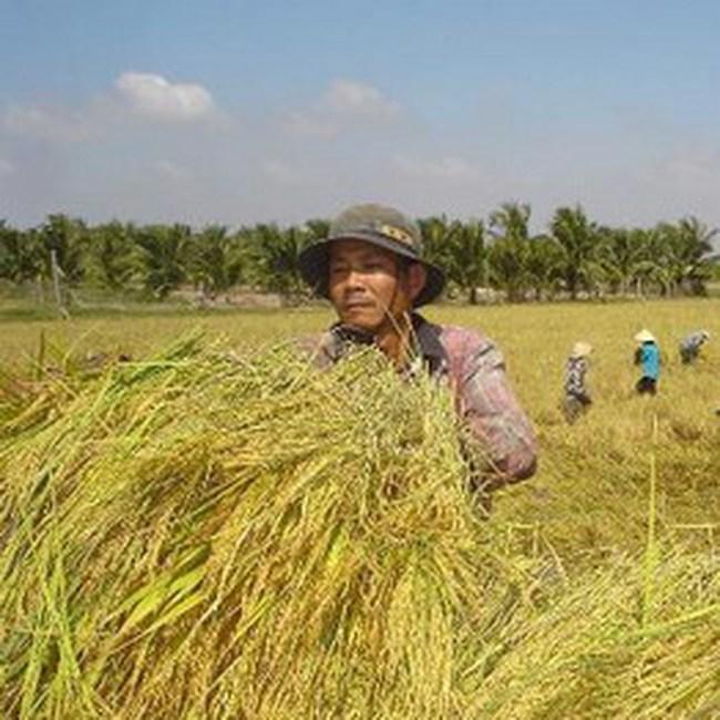 Thí điểm thực hiện bảo hiểm nông nghiệp theo thời tiết