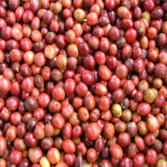 Giá cà phê robusta giảm