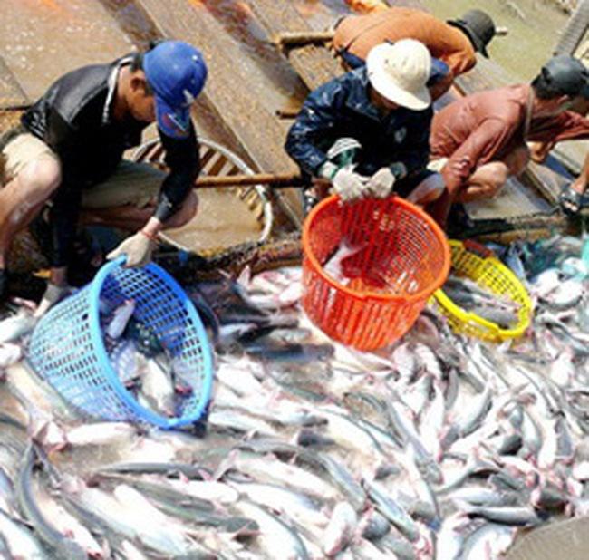 6/5/2009, Mỹ xem xét 5 năm thuế chống bán phá giá cá tra Việt Nam