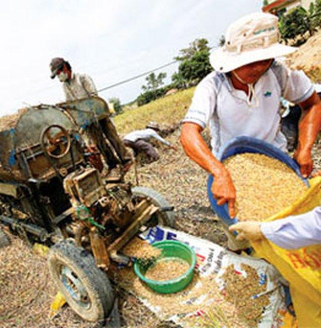 Nông nghiệp 2009: Khó đạt mục tiêu