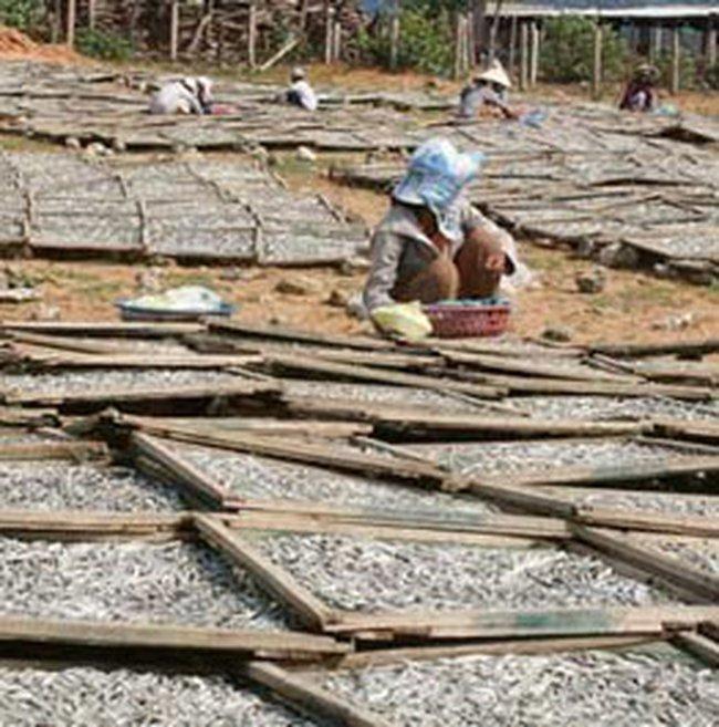 Việt Nam nhập hơn 300 triệu USD thủy sản