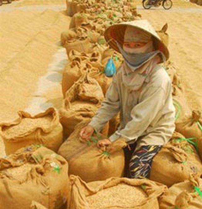 4.000 tỷ đồng hiện đại hóa nông nghiệp ĐBSCL