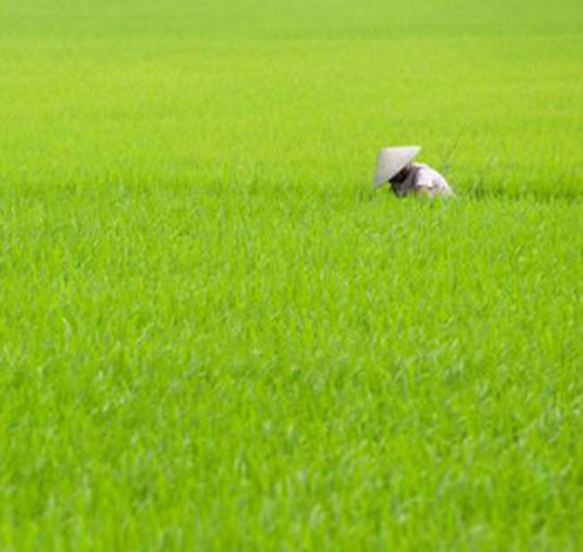 Bảo vệ thực vật An Giang: EPS đạt 8.122 đồng