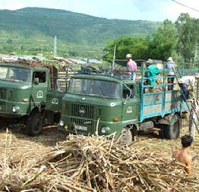 Giải cơn khát nguyên liệu cho nhà máy đường