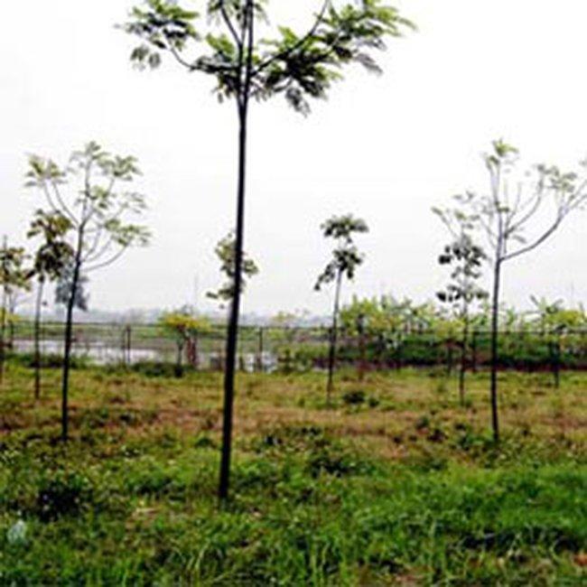 Nhiều dự án đầu tư ở Hà Nội nguy cơ bị đình lại