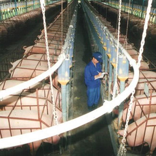 CTCP Thanh Bình: 5,486 tỷ đồng LNTT 6 tháng, đạt 48% kế hoạch