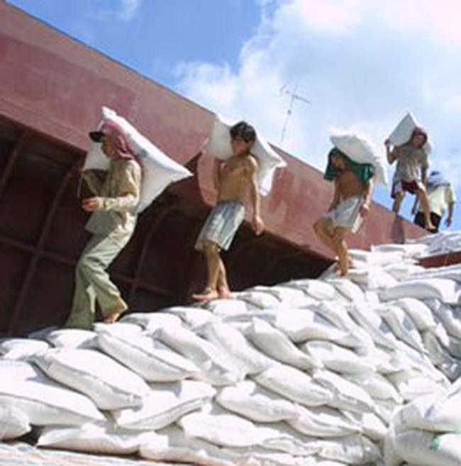 Việt Nam rớt thầu 78.000 tấn gạo bán cho Philippines