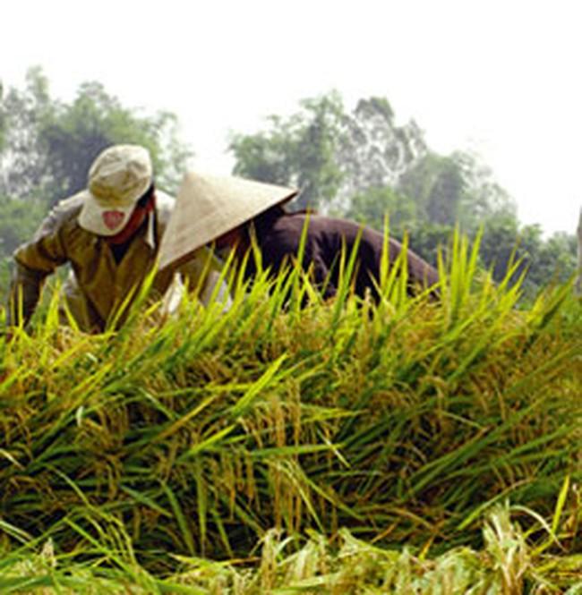 Phát triển bền vững từ nông nghiệp