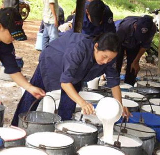 TRC: Không lo ngại việc kiểm soát chặt nhập khẩu cao su vào Trung Quốc