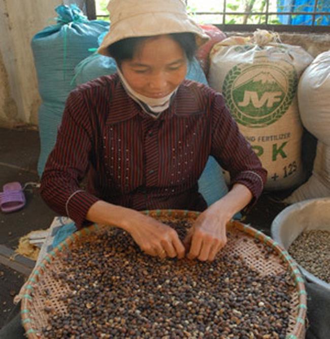 7 tháng, kim ngạch xuất khẩu cà phê giảm 15,7%