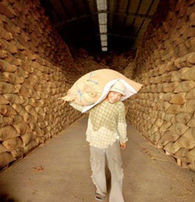 Thị trường lúa gạo nhiều biến động