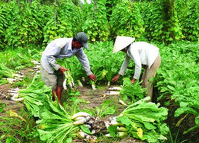 Hỗ trợ 50% lãi suất cho các hộ nghèo vay đầu tư sản xuất