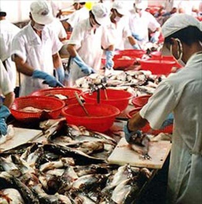 Xuất khẩu cá tra sang Tây Ban Nha phục hồi
