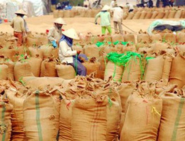 Hỗ trợ 100% lãi suất cho doanh nghiệp thu mua tạm trữ lúa, gạo