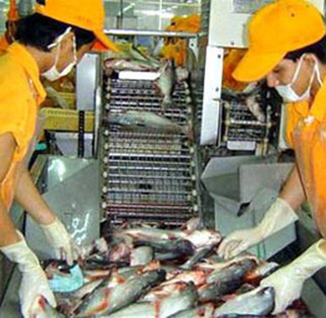 Giá cá tra đồng loạt giảm tại các thị trường