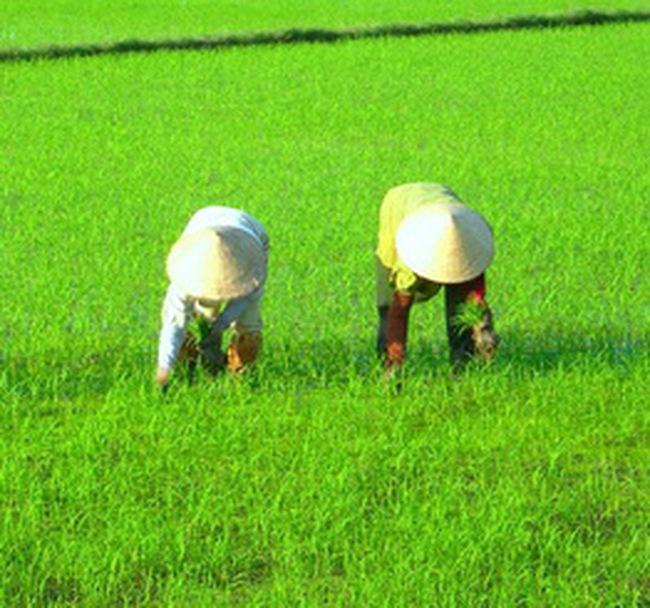 Bảo vệ thực vật An Giang chia cổ phiếu thưởng tỷ lệ 2:1