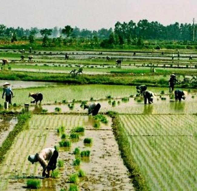 Nông nghiệp năm 2010: Đổi thay để bứt phá