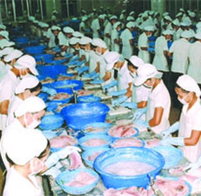 Nhà máy thủy sản thiếu nguyên liệu trầm trọng