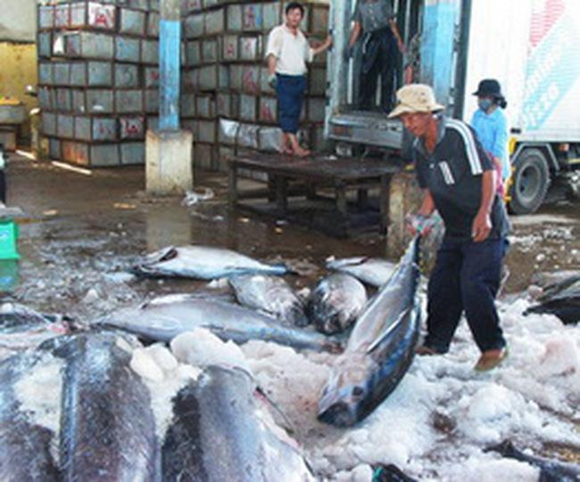 Xuất khẩu cá ngừ năm 2009 tăng vào những tháng cuối năm