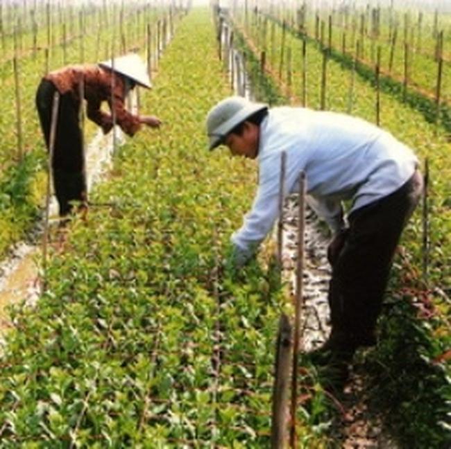 Xây khu nông nghiệp công nghệ cao ở Hậu Giang