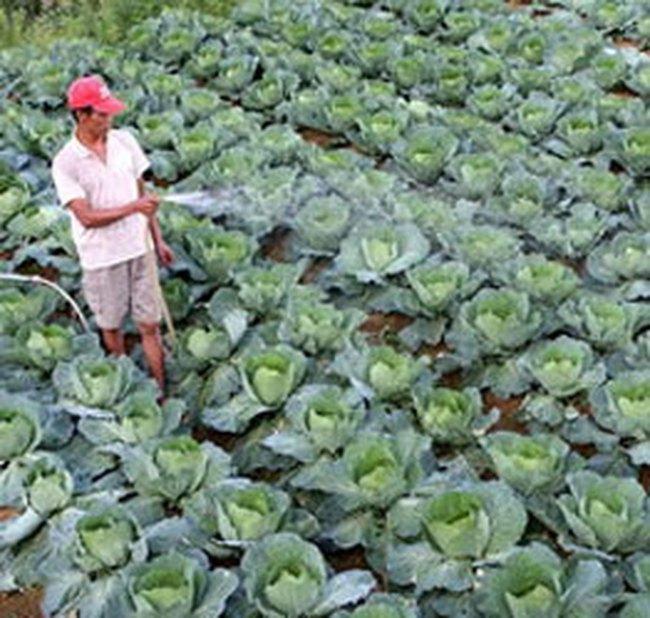 Giá rau xanh các loại tại Hà Nội tăng mạnh