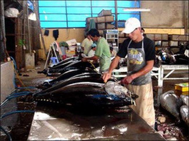 Năm 2009 xuất khẩu cá ngừ của Việt Nam đạt gần 181 triệu USD
