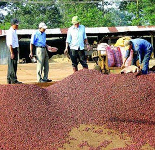Xuất khẩu cà phê: lại bị ép giá