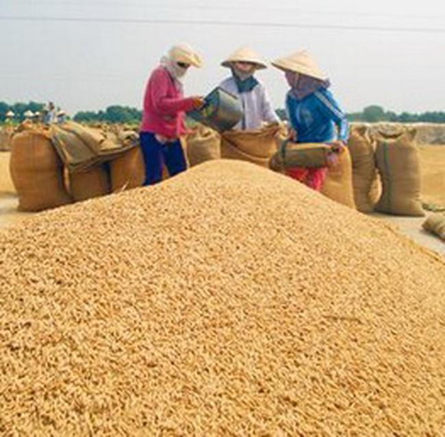 Sản xuất gạo, cao su sẽ bị ảnh hưởng nghiêm trọng