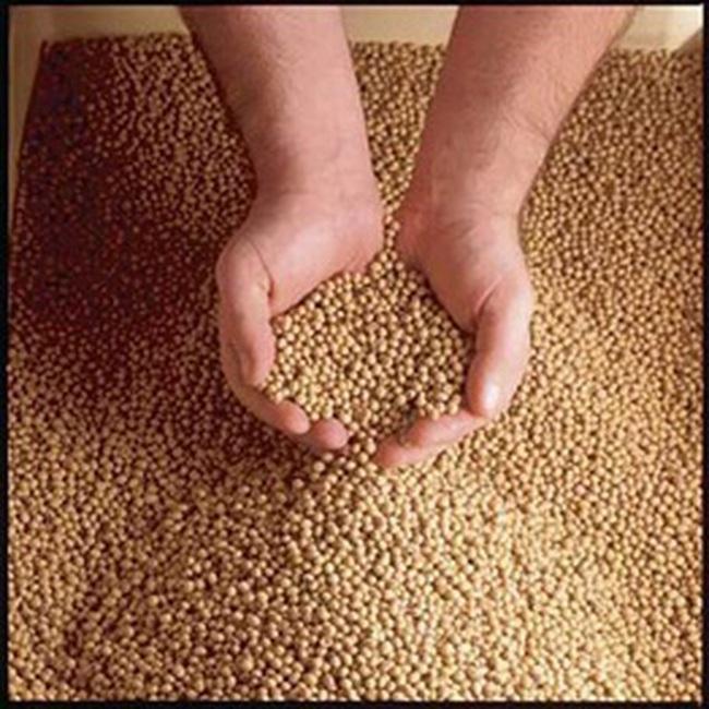 Nguyên liệu thức ăn chăn nuôi giảm mạnh
