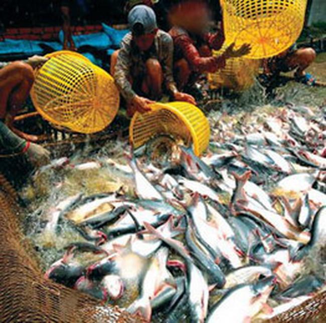 Cá tra, basa Việt Nam lại gặp rào cản khi vào Mỹ