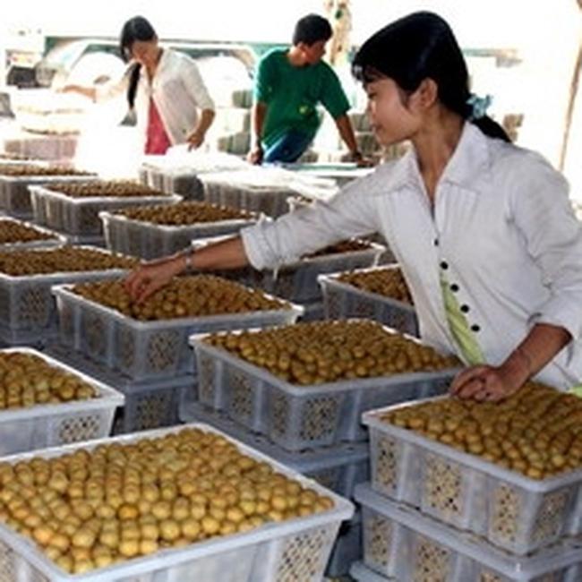 Bộ Công Thương: Nhập khẩu nông lâm sản là cần thiết