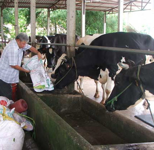 Lình xình giá thu mua sữa