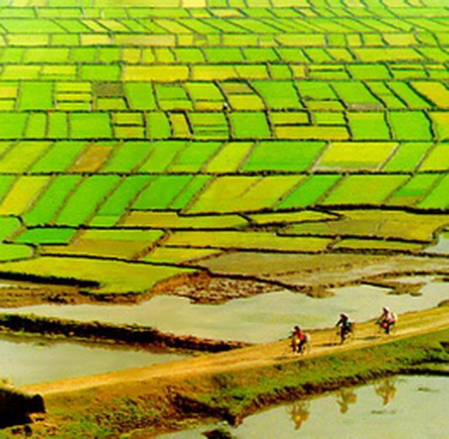 Qũy đất dành cho trồng lúa là tài sản cần bảo vệ