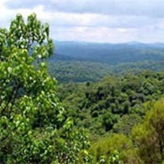 8 doanh nghiệp nước ngoài đã được cấp phép thuê đất trồng rừng