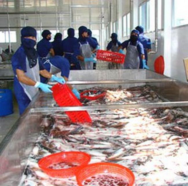 Bán rẻ cá tra vào Mỹ, chỉ lợi trước mắt