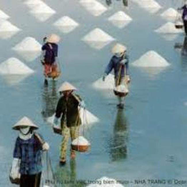 Hỗ trợ 100% lãi suất cho vay sản xuất muối