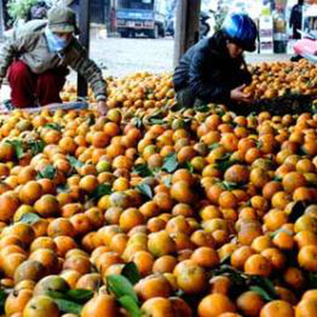 Hoa quả, thực phẩm giải nhiệt tăng giá dữ dội