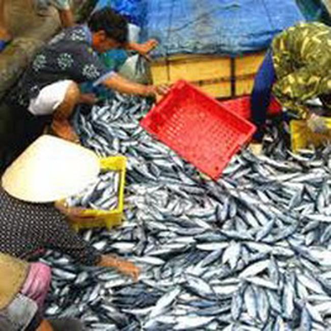 Hà Nội: Thu hoạch 28.000 tấn thủy sản