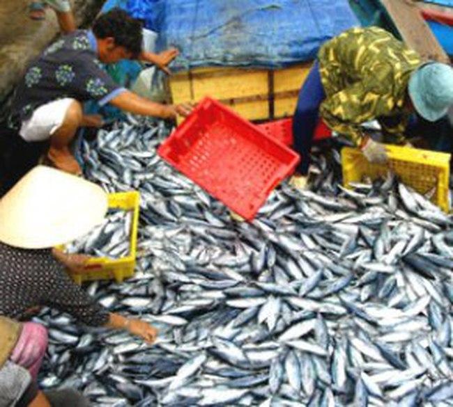 Xuất khẩu thủy sản sang Trung Quốc 8 tháng đạt 90 triệu USD, tăng 47%