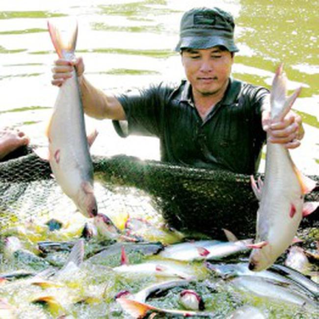 Cá tra Việt và đậu nành Mỹ