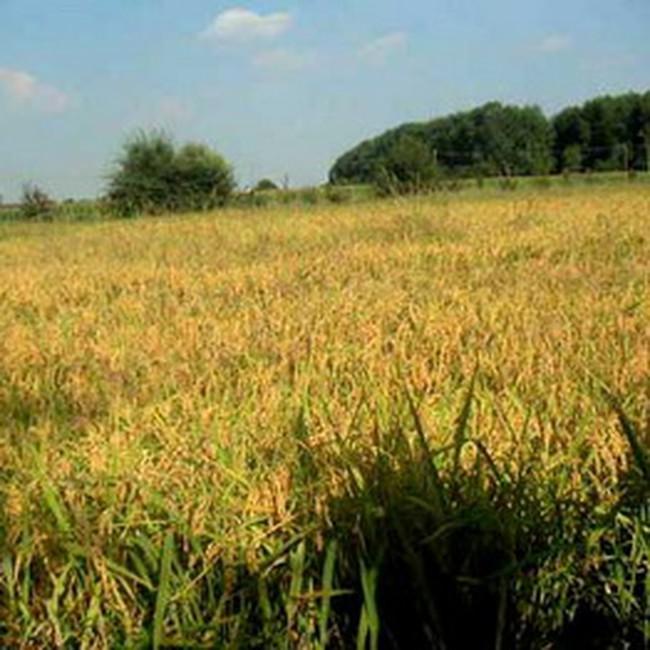 Giảm tỷ lệ dự trữ bắt buộc đối với tổ chức tín dụng có dư nợ cho vay nông nghiệp trên 40%
