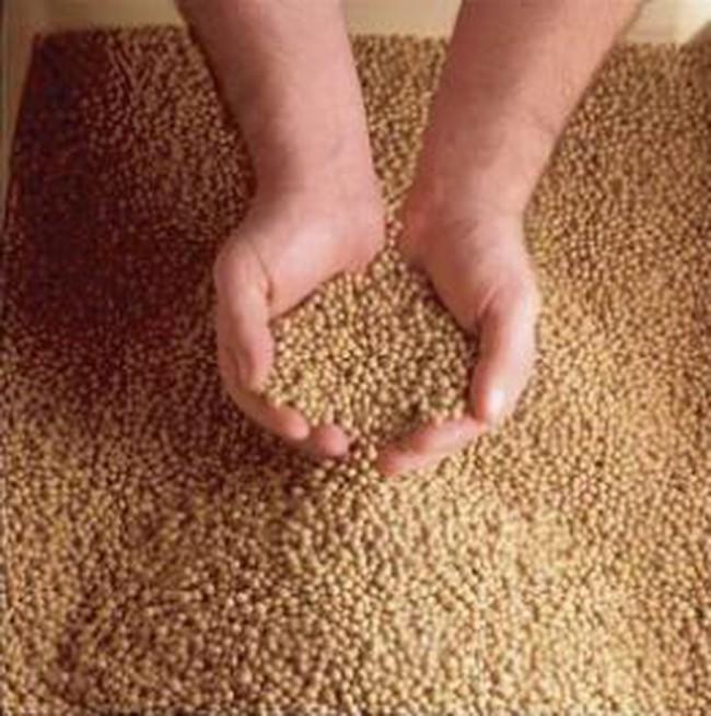 Thiếu nguyên liệu thức ăn gia súc