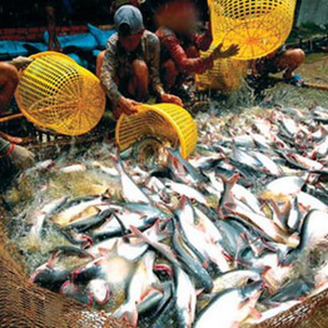 Thuế chống phá giá kéo giảm xuất khẩu cá tra